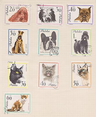 (Q20-14) 1960s Poland mix of 10 dogs &cats stamps value to 1z (E)