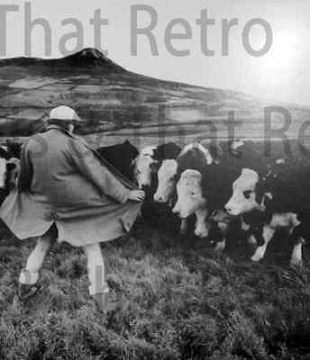 Expose yourself, funny photo of man opening his coat to cows