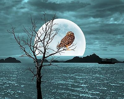 Teal Black Brown Owl Moon Tree Silhouette Home Decor Photo Print Picture Matted