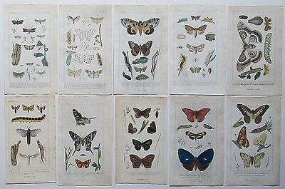 1837 10X Genuine Antique Cuvier Insect Prints Butterfly Moth Various Types  Etc.