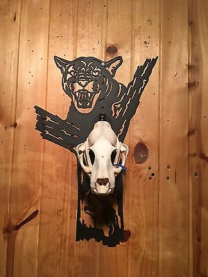 Mountain Lion Cougar Skull Mount Kit with Hound with Skull Hanger Made in USA