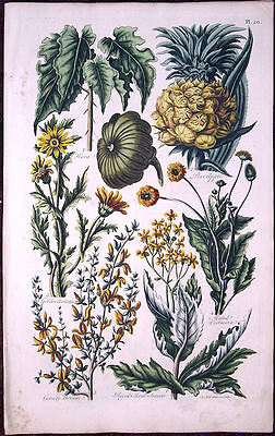Antique Scarce Large Hand-Coloured Hill's Garden Flower Print 250 Years Old, #20