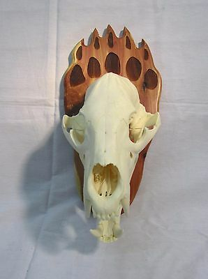 Bear Paw Skull Mounting Plaque For European Taxidermy - Whitetail Woodcrafters