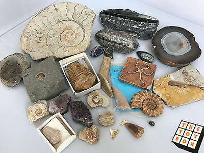 Fossil & Stone Collection Amethyst Ammonite Trilobite Originals & Reproductions