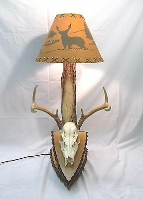 Buck Rub Deer Skull Lamp for European Taxidermy- Whitetail Woodcrafters