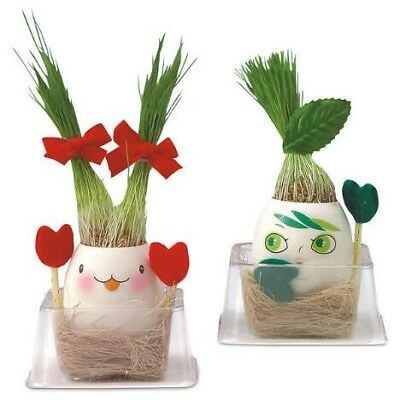 Magic Egg Baby Wheatgrass Plant - Just Add Water & Watch the Grass Grow!