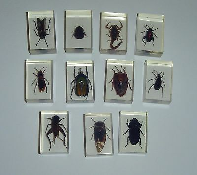(11) Real Bug Insect Speciman in Resin Lucite Plexiglas  Free Shipping REDUCED