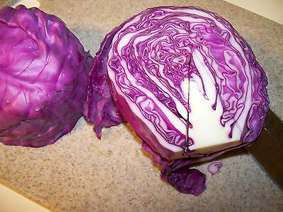 CABBAGE RED DUTCH 60 seeds unusual coloured garden vegetable Heirloom NON GMO