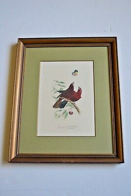 Original 19th Century hand color engraving by Lemaire of of Birds, 1800-1899