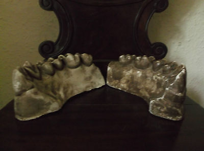 Two Rare Antique 19Th C Large Plaster Anatomical Teeth Models, Ex French Museum