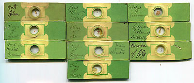 Ten 1800s Continental-Sized Microscope Slides, attributed to Bourgogne