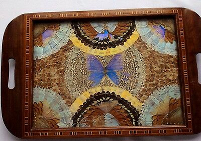 Large Vintage Real Butterfly Wing Inlaid marquetry Serving Tray Taxidermy