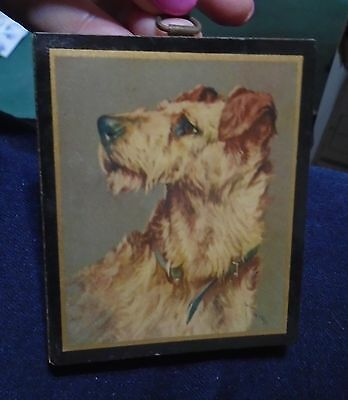 Vintage Airdale Terrier dog wood wooden plaque Wardle