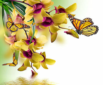 Diamond Painting-Diamant Stickerei/Malerei Diamant Bild Orchideenduft 42 x 35 cm