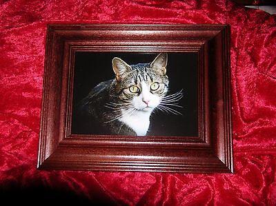 Very Nice Wooden Picture Frame 8x10 inch. Keep Great Cat Photo or Use Your Own!