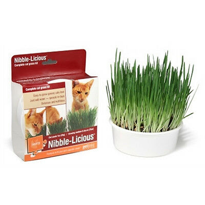 Complete Cat Grass Kit Natural Treat Free Small Catnip and Shipping Included