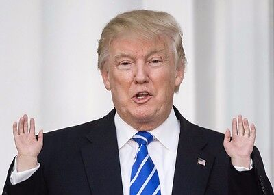 Tiny Donald Trump Hand. Stroke your cat! Dog stroking! Get small Trump hands!