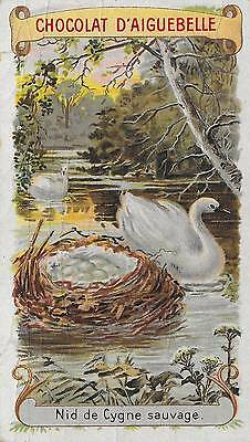 FRENCH VICTORIAN TRADE CARD ~ BEAUTIFUL SWANS, MAGICAL NEST w/EGGS, Late 1880's