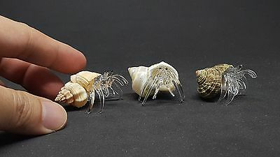Clear Glass Hermit CRAB In Real Shell Art Glass Animal Figurine Marine Lifes