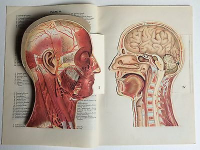 Antique foldout bookplate anatomy HEAD medical dissection chromolithograph
