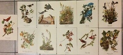 "Vintage Audubon Best Loved Bird Paintings Prints 9x12"" Lot of 11"