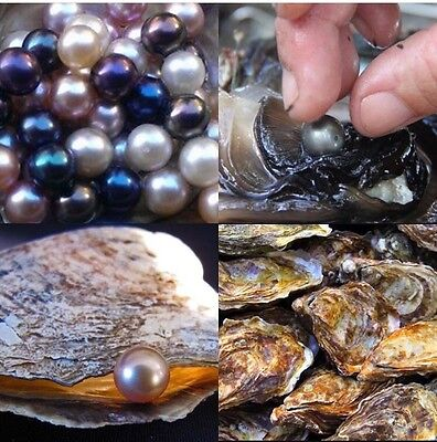 MAKE ME AN OFFER! 6 AKOYA OYSTERS WITH PEARLS 6-7mm