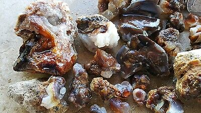 3.3 lbs. Deer Creek Fire Agate rough from  Arizona 49 pieces