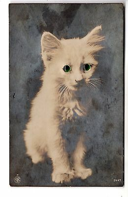 early 1900 LITTLE WHITE CAT with 3D EYES ANTIQUE PHOTO POSTCARD EUROPEAN