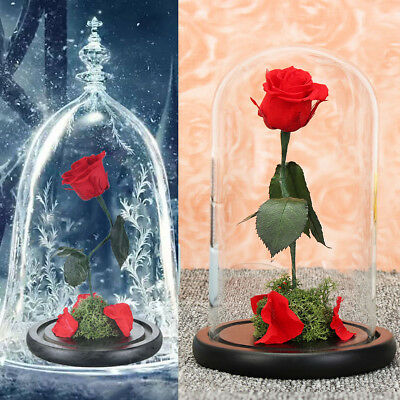 Beauty And Beast Rose Glass Cover Preserved Natural Flowers Gifts Eternal Love