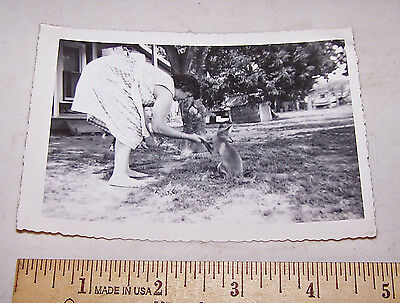 "Vintage Pet Tame FOX Photo - 3.5"" x 5"" - Estate find"