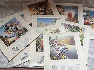 10 x vintage nature wildflower paintings 'Discover Australia with Shell' posters