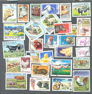 Farm Animals 50 all different collection