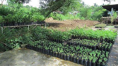 Sprouting Seeding Nursery Poly Bags for Germinate Seeds & Plant Cuttings 100 Nos