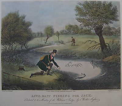 Live Bait Fishing for Jack  antique hand colour print by R.Reeve del. J.Pollard