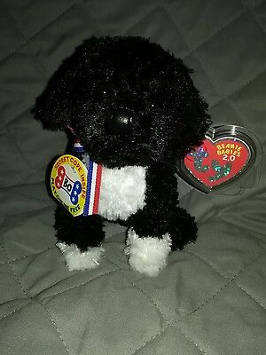 TY Beanie baby 2.0 Bo the Portuguese water dog New with tags