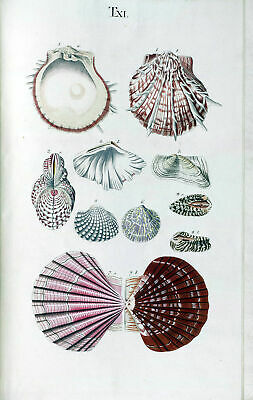 Seashells Poster Nature Marine Reef Sea Shell Antique Repro Print #2