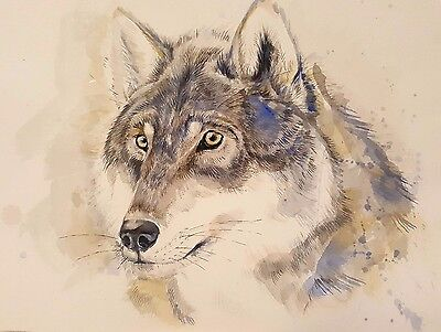 Original Watercolour Painting By A. Henne - The Grey Wolf