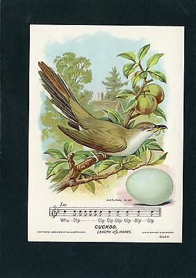 Trade Card of Baltimore Oriole Bird byGood Will Soap Sold in Lynn, MA by Marsh