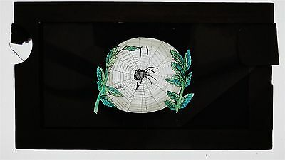 Spider & A Fly - Double Slipping Hand Painted Wooden Lantern Slide