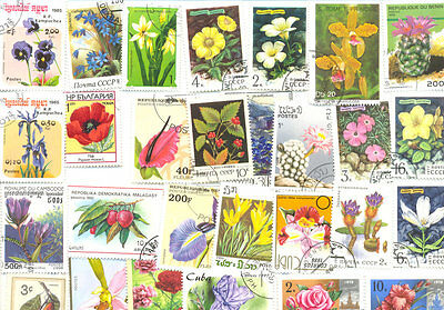 Flowers-Plants-collection of 1000 all different-large-medium-Cacti and fruits