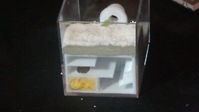 The V Arnema nest - Ant farm Formicarium- 10mm bigger nest space and mesh floor
