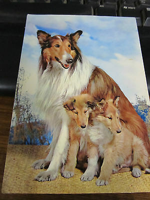 Vintage 1960's Italian postcard, Collie dog and two pups posted castelforte