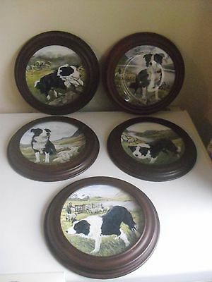 5 x BRADFORD EXCHANGE PLATES OF BORDER COLLIES BORDER COUNTRY COLLECTION