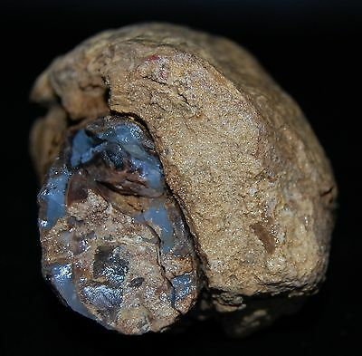 Old Stock Specimen White Petrified Wood Blue layered Botryoidal Forest 1+ lbs.