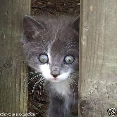 SPONSOR RESCUED MR.BUFF FERAL CAT KITTEN  RESCUE FOOD VET Rec COLOR PHOTO