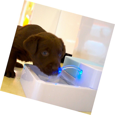 ParaCity LED Automatic Pet Water Drinking Filter Fountain Bowl Dogs Cats Drinker
