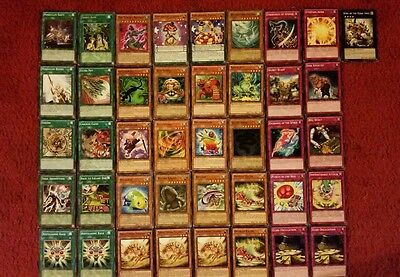 Yu-Gi-Oh Reptile Deck - 40 cards complete BONUS 5 cards