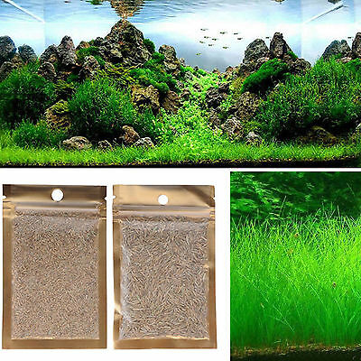 Fish Tank Aquarium Aquatic Water Grass Plant Seeds Decor Garden Foreground Plant