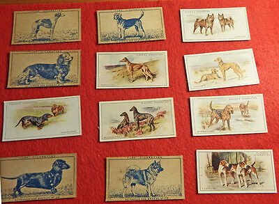 Vintage Set Of 12 Hound Breed Cigarette Cards