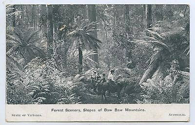 1908 Pt Npu Postcard American Fleet Visit Forest Scenery Baw Baw Mountain H39